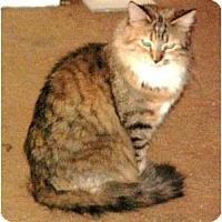 Adopt A Pet :: Chiffon - Scottsdale, AZ