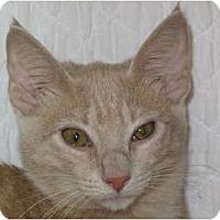 Adopt A Pet :: Raya - Port Republic, MD
