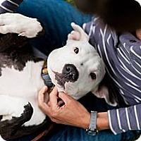 Adopt A Pet :: Lucky - Reisterstown, MD