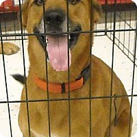 Adopt A Pet :: Chloe - Beaumont, TX