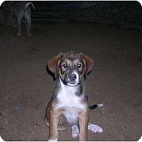 Adopt A Pet :: Marvyn - Glastonbury, CT