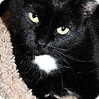Adopt A Pet :: Jenny - Plainville, MA
