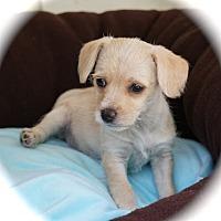 Adopt A Pet :: Tutti - La Habra Heights, CA