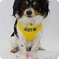 Adopt A Pet :: Charlie - Bowie, MD