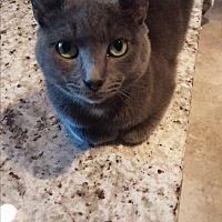 Adopt A Pet :: Crash - Lauderhill, FL