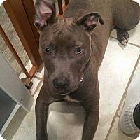 Adopt A Pet :: Faith fka Rosemary - Ardsley, NY
