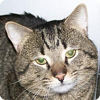 Adopt A Pet :: Saxon - Kalamazoo, MI