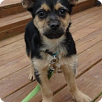 Adopt A Pet :: Lucy - New Oxford, PA