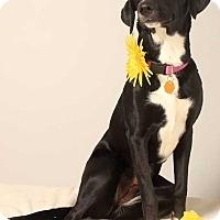 Adopt A Pet :: Aiya - West Branch, MI