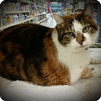 Adopt A Pet :: Christie-ADOPTED! - Tracy, CA