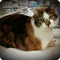 Adopt A Pet :: Christie - Tracy, CA