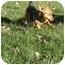 Photo 3 - Dachshund Mix Dog for adoption in Xenia, Ohio - Danny