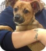 German Shepherd Dog Mix Puppy for adoption in Modesto, California - Jay Jay