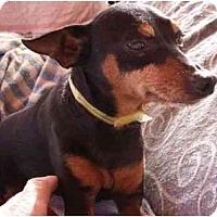 Adopt A Pet :: Strader - Phoenix, AZ