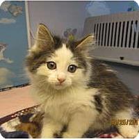 Adopt A Pet :: Royce - Sterling Hgts, MI