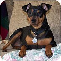 Adopt A Pet :: Rocky - Springvale, ME