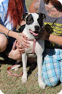 Pit Bull Terrier Mix Dog for adoption in Iowa Park, Texas - Stella