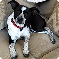 Adopt A Pet :: Jewels - Oliver Springs, TN