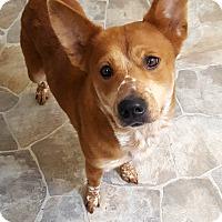 Adopt A Pet :: Buttercup - Fennville, MI