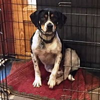 Adopt A Pet :: Lonely Girl - Roxboro, NC