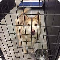 Adopt A Pet :: Rocky - Laingsburg, MI