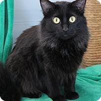 Adopt A Pet :: Shirley - O Fallon, IL
