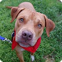 Adopt A Pet :: Bret - Wilmington, DE