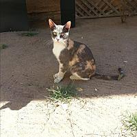 Adopt A Pet :: Dottie - Fresno, CA