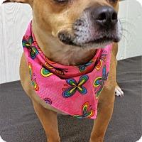 Adopt A Pet :: Sadie - Tavares, FL