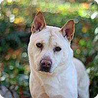 Adopt A Pet :: Onyx - Port Washington, NY