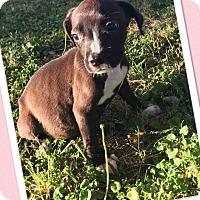 Adopt A Pet :: Eva - Scottsdale, AZ