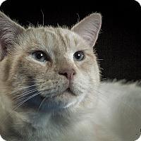 Adopt A Pet :: Quimby - St. Louis, MO