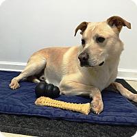 Adopt A Pet :: Hunter - Cumming, GA