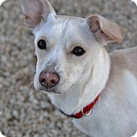 Adopt A Pet :: Champ - Meridian, ID