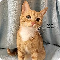 Adopt A Pet :: KC - Foothill Ranch, CA