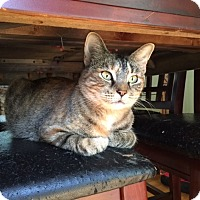 Adopt A Pet :: Whisper - Bentonville, AR
