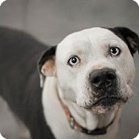 Adopt A Pet :: Sadie - Harrisonburg, VA