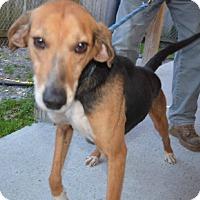 Adopt A Pet :: Sawyer - Lexington, MA