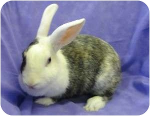 Other/Unknown Mix for adoption in Los Angeles, California - Scintilla