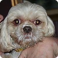 Adopt A Pet :: Autumn - Westfield, IN