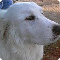 Adopt A Pet :: Mac  *Adopted - Tulsa, OK