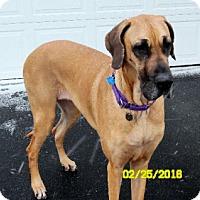 Adopt A Pet :: Joanie - Pearl River, NY