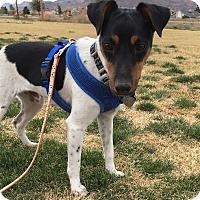 Adopt A Pet :: Logan in Dallas - Dallas/Ft. Worth, TX