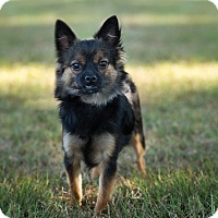 Adopt A Pet :: Fynn - Daleville, AL