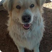 Adopt A Pet :: Joey - Apple Valley, CA