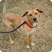 Adopt A Pet :: Farley - Muldrow, OK