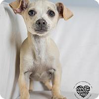 Adopt A Pet :: Tina - Inglewood, CA