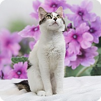 Adopt A Pet :: Irene - Houston, TX