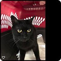 Adopt A Pet :: Ziggy - Fallbrook, CA