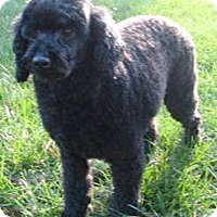 Adopt A Pet :: Tristan - Dover, MA